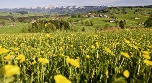 Gastgeber im Westallgäu mit Informationen zu freien Unterkünften (Zimmer, Ferienwohnung)