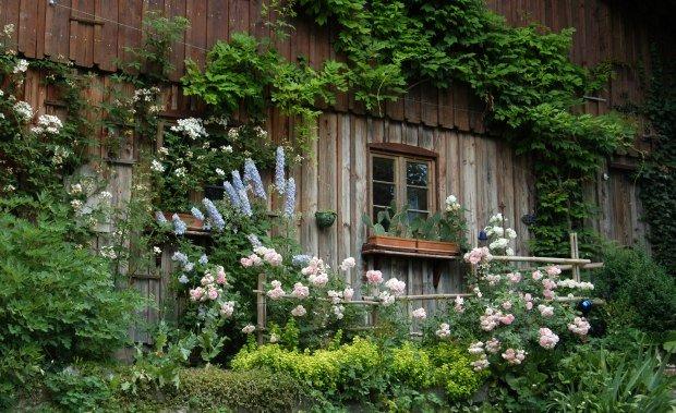 Unterkünfte im Westallgäu Fensterrahmen mit Blumen