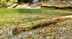 Hausbachklamm Baumstamm im Wasser