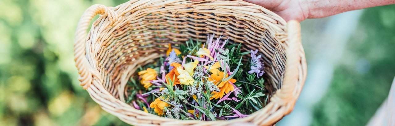 Ein Korb voller Kräuter und Blüten im Westallgäu © Frederick Sams, Landkreis Lindau (Bodensee)