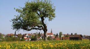 Dorfansicht Hergensweiler