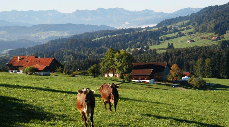 Oberreute Ortsansicht mit Kühen