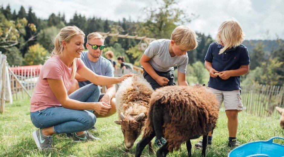 Ausflüge planen - begegnen Sie den Tieren im Westallgäu hautnah