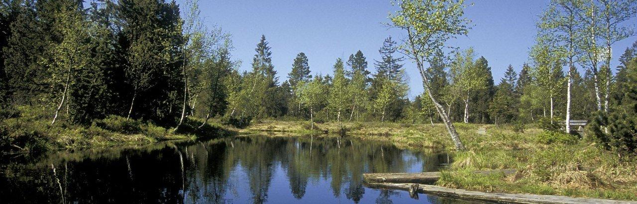 Wildrosenmoos in Oberreute entlang der Westallgäuer Wasserwege