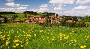 Gemeinde Oberreute Ortsansicht mit Löwenzahn