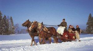 Pferdeschlittenfahrt im Winter im Westallgäu
