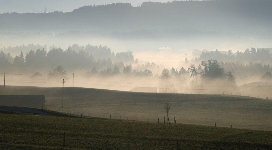 Hergensweiler im Nebel