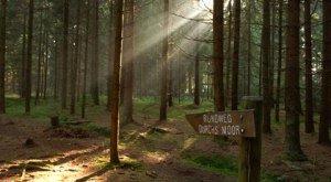 Im Wald beim Moor herrscht eine geheimnisvolle Stimmung., © Gemeinde Lindenberg